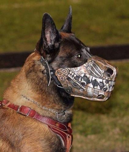 Đây là chiêc rọ mõm chó từng một thời gây sốt vì quá