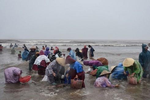 Hàng trăm người dân đổ xô đi vớt sò tại biền Thiên Cầm (Ảnh Dân trí).