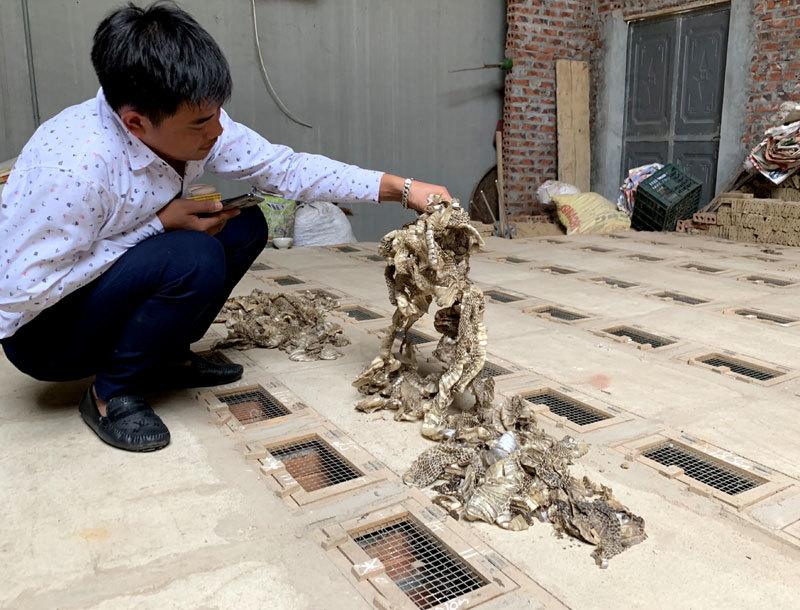 Rắn lột da, người dân gom lại đem bán được với giá 200.000 đồng/kg