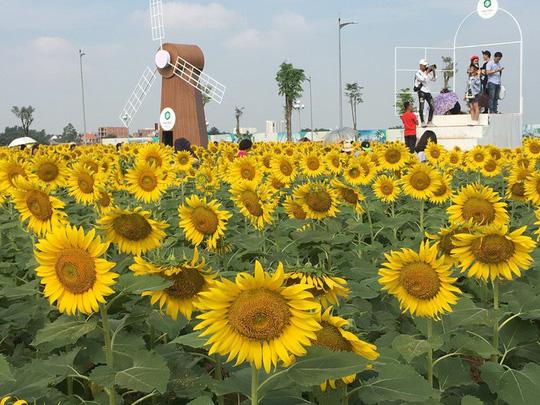Vườn hoa hướng dương ở TP HCM mở cửa dịp Tết Dương lịch vừa qua. Ảnh: Linh Anh