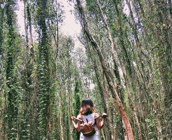 Rừng tràm đẹp thơ mộng và ma mị trong MV của Hoàng Thùy Linh. (Nguồn: Fb Nguyễn Thị Vân Anh)