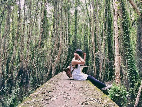 Hai bên là hai hàng cây cao ngút tầm mắt, tạo thành một khung cảnh lãng mạn và thiên nhiên vô cùng. (Nguồn: Fb Nguyễn Thị Vân Anh)