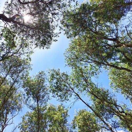 Nắng ngập trên đầu, xen qua những tán lá, không khí rất mát mẻ. (Nguồn: Fb Nguyễn Thị Vân Anh)