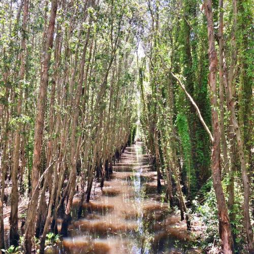 Sự tĩnh mịch khu rừng sẽ làm bạn vô cùng thích thú. (Nguồn: Fb Nguyễn Thị Vân Anh)