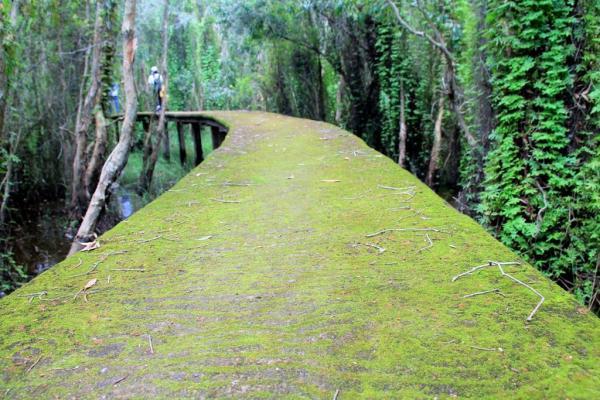 Màu xanh của rêu phủ kín cả đường đi. (Nguồn: Internet)