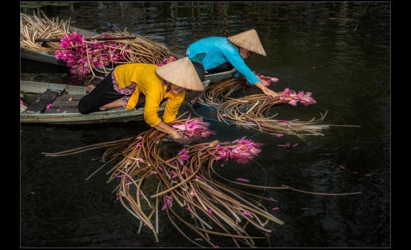 Những người nông dân đi thu hoạch hoa súng ở Châu Đốc (An Giang). Cuộc sống mưu sinh tần tảo một nắng hai sương hàng ngày là một trong những nét đẹp của người dân vùng Tây Nam Bộ. Dù vất vả, họ vẫn mỉm cười, tìm kiếm niềm vui trong lao động. Ảnh: Nguyễn Văn Tuấn.