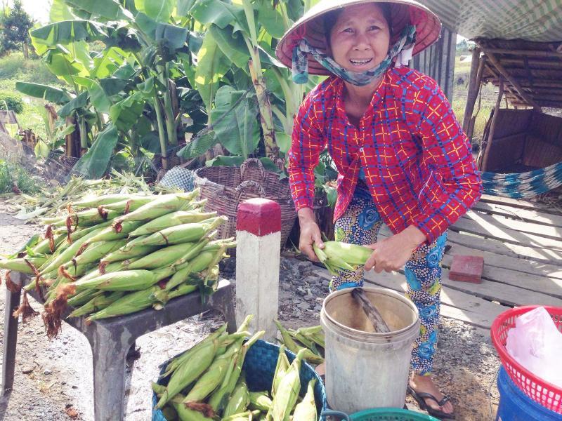 Hàng trăm sạp bắp chín, bắp sống bán dọc đường nối Cần Thơ- Vị Thanh tạo nét đặc trưng cho con đường. Ảnh: ĐĂNG HUỲNH