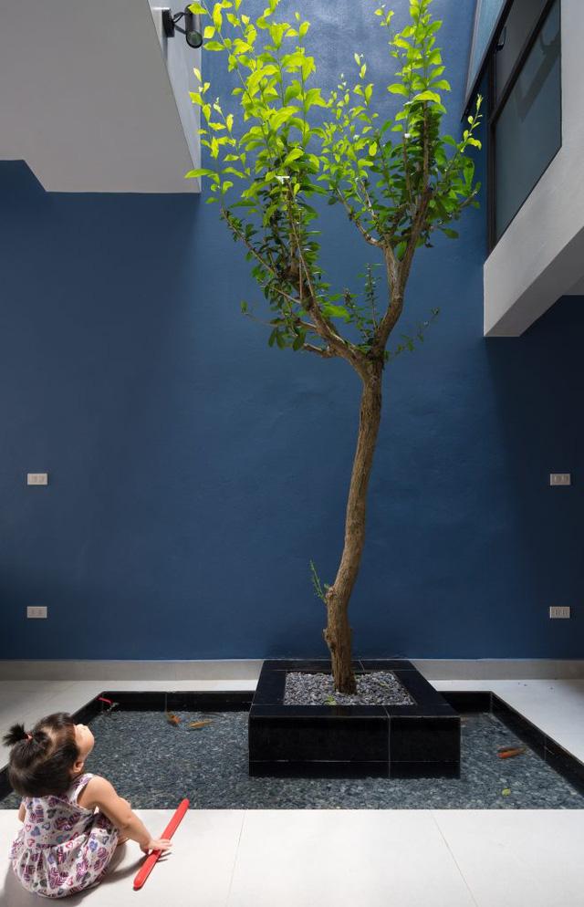 Khu vực bể cá và cây xanh là góc tiểu cảnh ấn tượng nhất trong ngôi nhà.