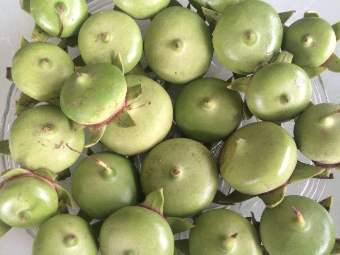 Trái bần chín dùng để thay thế chanh, quất làm vị chua