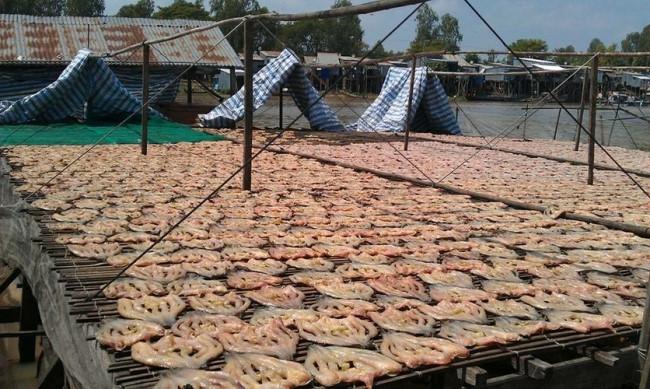 Việc chế biến khô cá lóc miền Tây phụ thuộc nhiều vào thời tiết. Vì vậy, mùa nắng là thời điểm các làng nghề làm khô cá lóc nhộn nhịp nhất. Ảnh: Báo An Giang.