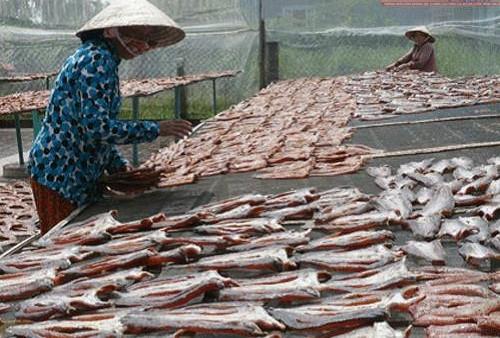 Để làm ra 1kg cá lóc khô phải cần đến 4kg cá tươi. Do đó, giá khô cá lóc không hề rẻ. Ảnh: Bến Tre.