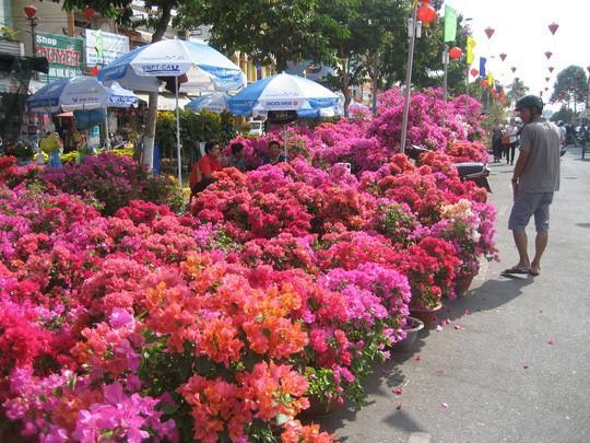 Các loại hoa được trưng bày tại bến Ninh Kiều (TP.Cần Thơ). Nhiều năm trước, tại đây được xem là điểm thu hút nhiều khách nhất.