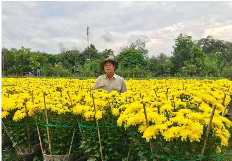 Quang cảnh tại làng hoa Phó Thọ - Bà Bộ (quận Bình Thủy, TP.Cần Thơ).