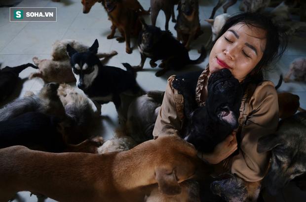 Hiện nay cô đang nhận nuôi 350 chó mèo suốt mùa dịch Covid-19