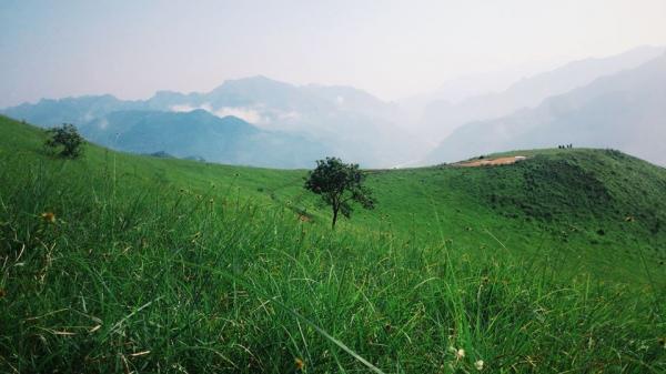 Đồng cỏ xanh tận chân trời - Ảnh: Tea Khanh