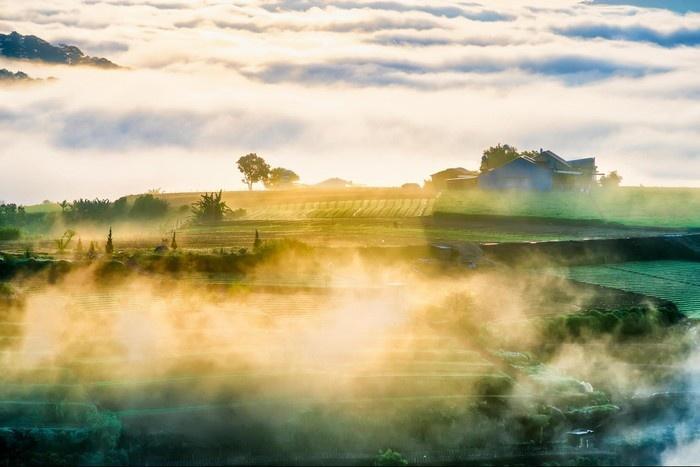 Ban mai đầy mê hoặc với sương sớm ở làng chè Cầu Đất - Ảnh: Vonfram