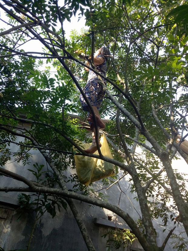 Hình ảnh bà ngoại trèo cây thu hút sự quan tâm từ cộng đồng mạng