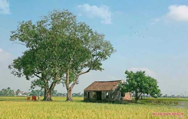 Quán Bà Canh ở làng Nghĩa Chế đã hàng trăm năm tuổi, trải qua bao biến động của thời gian và lịch sử, Quán Bà Canh vẫn tồn tại cho tới ngày nay. (Ảnh: Nhà báo Đoàn Minh Tấn)