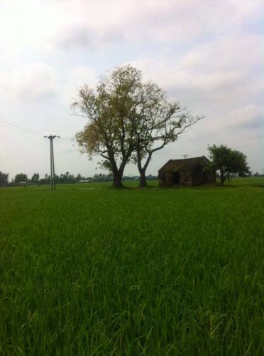 Quán Bà Canh trong mùa Hạ, khi những đồng lúa đang thời kỳ xanh mướt. (Ảnh: Nhà báo Đoàn Minh Tấn)
