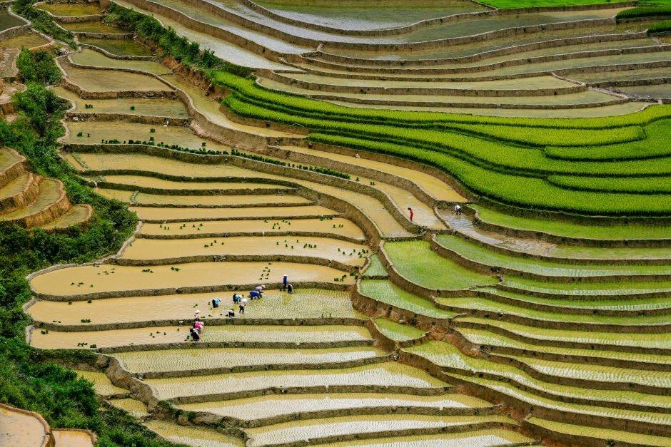 Ruộng bậc thang Mù Căng Chải (Ảnh: Nguyễn Anh Tuấn / Flickr)