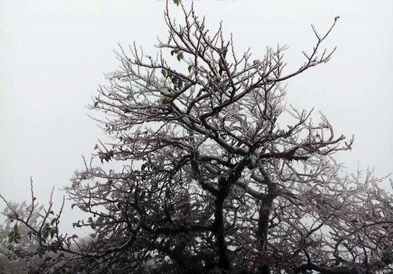 Cây cối bị băng giá bao phủ
