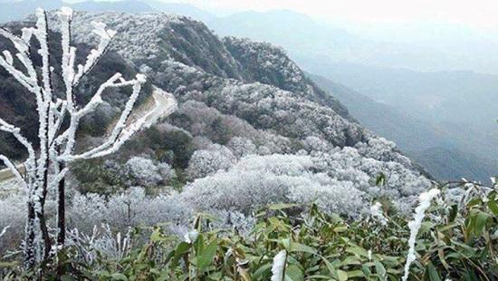 Đỉnh núi Phia Oắc ở Cao Bằng đựơcbăng tuyết phủ trắng xóa