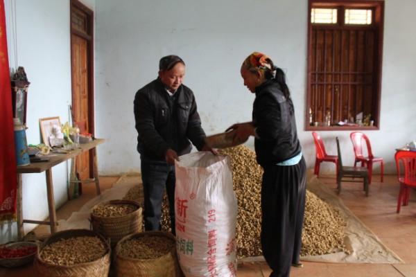 Nhiều hộ dân xóm Gằng Thượng, xã Thanh Long thu hàng chục triệu đồng từ trồng lạc hàng hóa.