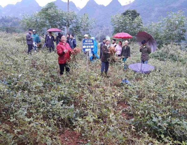 Mô hình lạc hàng hóa L14 được triển khai tại xã Lương Thông.