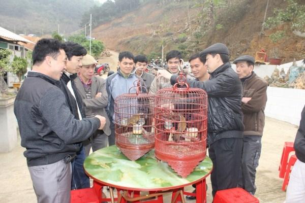 Một cuộc thi chim tại địa phương