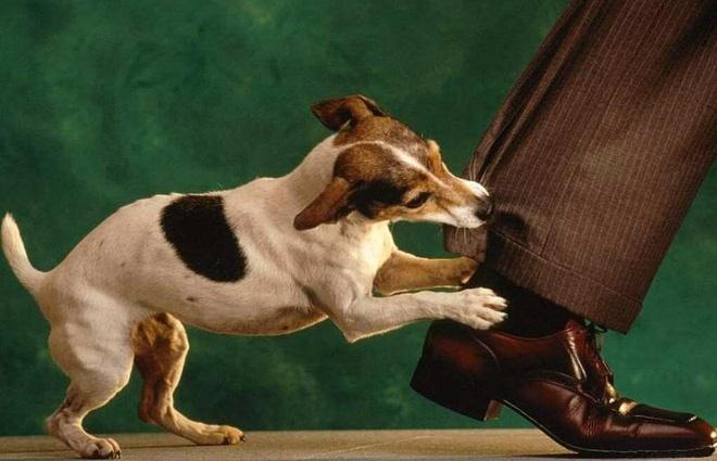Đối tượng thường gặp phải nguy hiểm do chó cắn không loại trừ người lớn hay trẻ nhỏ, trong đó đặc biệt phải nhấn mạnh đến trẻ em.