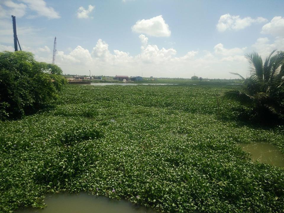 Kênh Hòa Bình thông với sông Đa Độ, người dân lo lắng cá sấu xuất hiện.