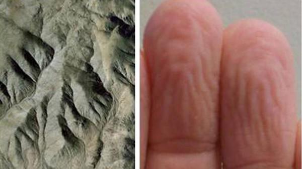 Những nếp nhăn trên da có chức năng tương tự như một mạng lưới thoát nước