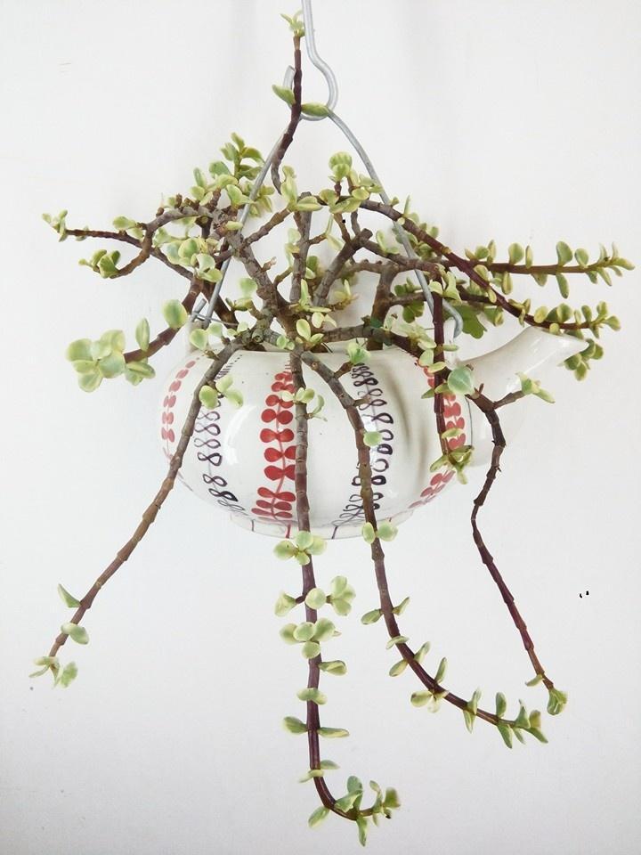 """Chủ nhân của góc vườn bonsai tâm sự: """"Lúc đầu chơi thì hoàn toàn là cảm tính, không có chút kinh nghiệm gì, sách báo rồi mạng cũng chưa có. Có cây nào thì chơi cây ấy. Lâu dần kinh nghiệm nhiều hơn thì mới có sự chọn lựa, mới có cây đẹp, dáng đẹp, thế đẹp. Lúc mới chơi thì cây bị chết, gãy hỏng do quá tay nhiều lắm. Giờ thỉnh thoảng mình vẫn làm hỏng cây nhưng ít hơn nhiều so với trước đây""""."""
