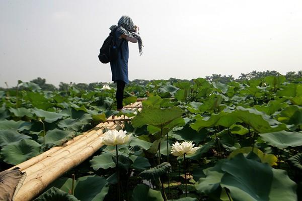 Nhiều nhiếp ảnh gia tiếc nuôi khi không biết đến đầm sen này từ đầu mùa.