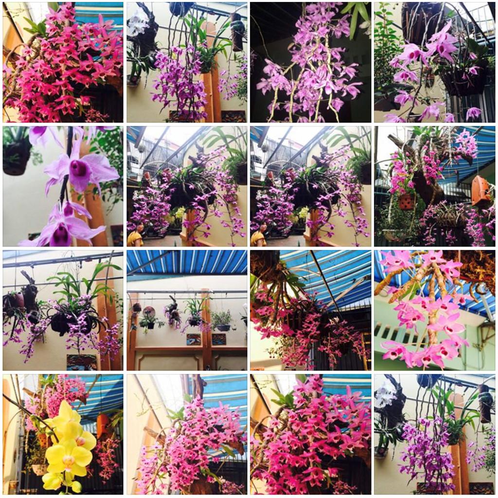 Trang cá nhân của trung tá Khuất Mạnh T. tràn ngập hình ảnh hoa lan do chính tay anh vun trồng. Ảnh: FBNV.