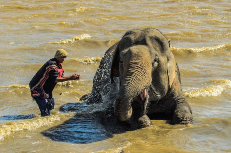 Anh nài tắm rửa cho voi giữa buổi trưa nóng bức.