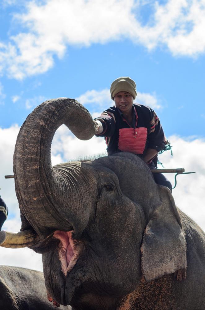 Cảnh đùa giỡn giữa người và nài voi.