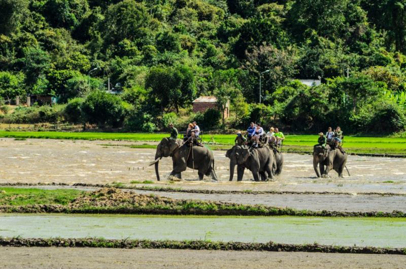 Những chú voi tại hồ Lak phục vụ khách du lịch tham quan.