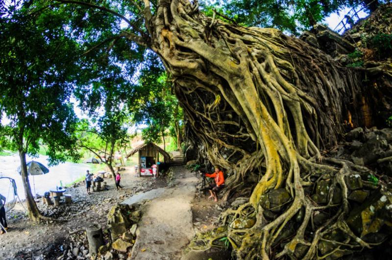 Gốc cây cổ thụ mọc trên đá tạo nên một phông nền như những gốc cây cổ thụ mọc trên đền Angkor (Campuchia).
