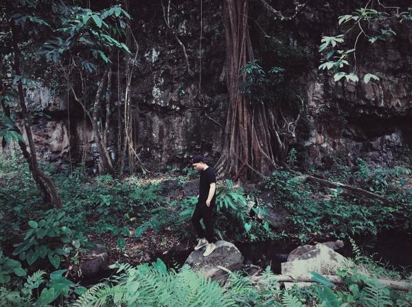 Hoang vu một góc rừng. (Nguồn: Vương Huỳnh Hoài Nhân)