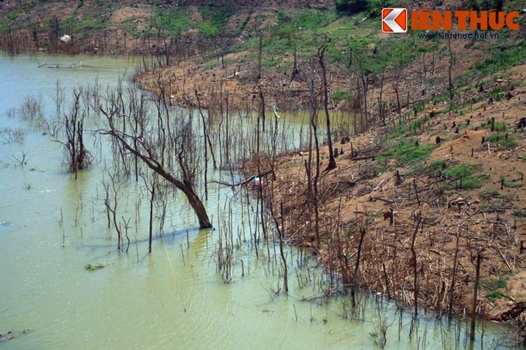 Vài năm sau khi công trình hoàn thành, dưới lòng hồ vẫn còn rất nhiều thân cây rừng bị chết do ngập nước