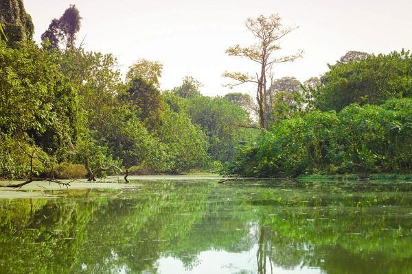 Hình ảnh vùng đất Yok Don trong phim hiện lên nguyên sơ và hùng vỹ.