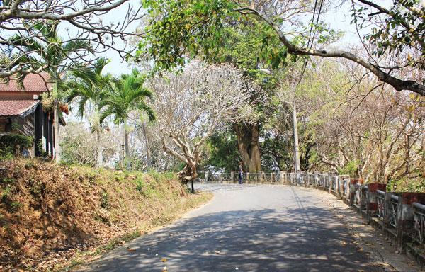 Ngôi biệt điện nằm trên ngọn đồi bạt ngàn cây xanh, dọc đường lên là hai hàng đại nở hoa rất lãng mạn.