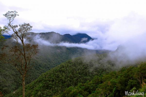 Rừng, núi và mây.