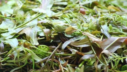 Lẩu lá rừng: Từng là một món ăn chống đói của người dân tộc Ê đê, đến nay lẩu lá rừng lại trở thành đặc sản Tây Nguyên đãi khách phương xa. Món ăn này giống như thứ canh thập cẩm với đủ các loại l