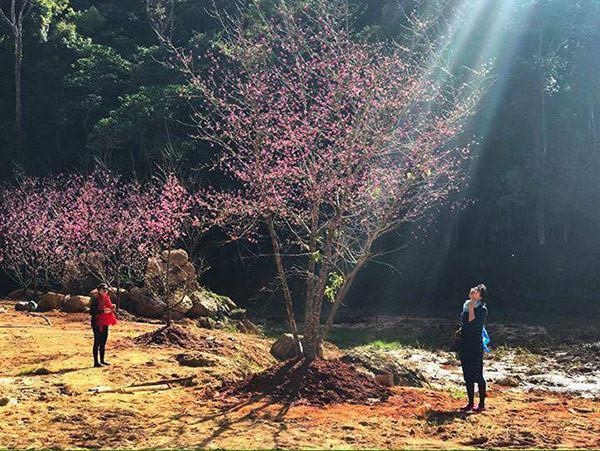 Đến với địa điểm du lịch mới ở Đà Lạt này, bạn sẽ được khám phá các nét đẹp thiên nhiên rất mộc mạc và bình dị với những đồi hoa dã quỳ, hoa đào Nhật Bản, bàn tay may mắn khổng lồ, vườn hoa đủ sắc màu, những con sông, con suối trong veo ở núi rừng Tây Nguyên.