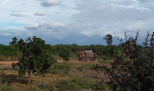 """Xe chở gỗ từ trong rừng đi ra như đi về chốn """"không người""""."""