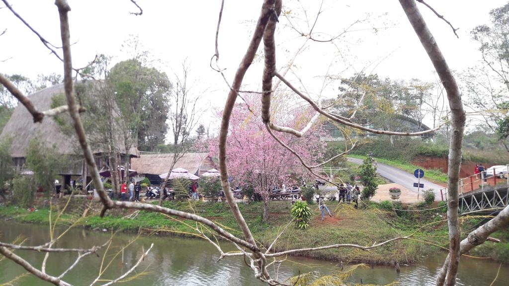 Những ngày gần đây, tại thị trấn Măng Đen (huyện Kon Plông, tỉnh Kon Tum) nơi được mệnh danh là Đà Lạt thứ 2 của Việt Nam đã được nhuộm hồng bởi sắc hoa mai anh đào.