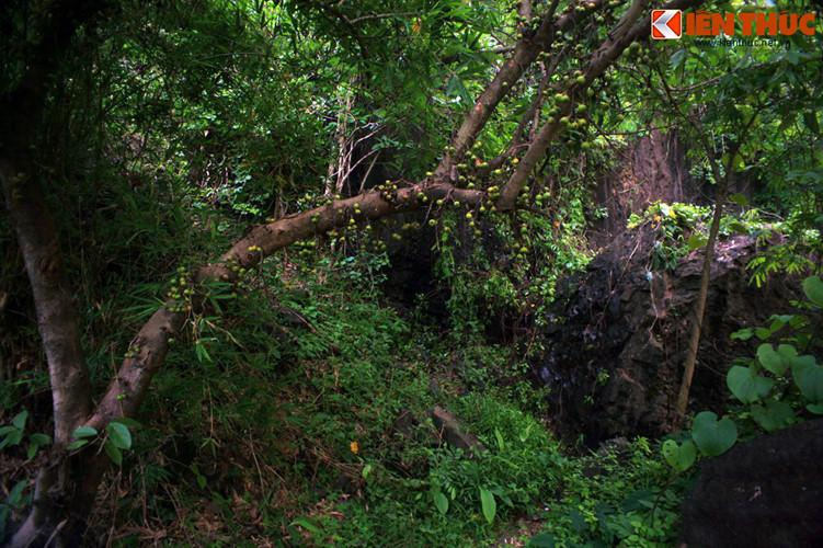 Với những du khách muốn tìm đến khoảng lặng của thiên nhiên trong những ngày đầu năm mới, hai khu Vườn quốc gia của tỉnh Đắk Lắk là Vườn quốc gia Chư Yang Sin và Vườn quốc gia Yok Don sẽ là sự lựa chọn tuyệt vời