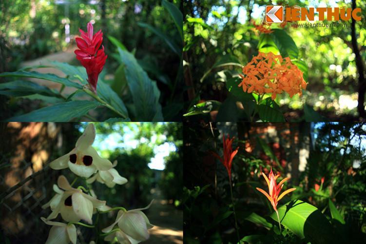 Các loài hoa rừng lạ mắt làm nên nét quyến rũ khó cưỡng của khu vườn cao nguyên này.